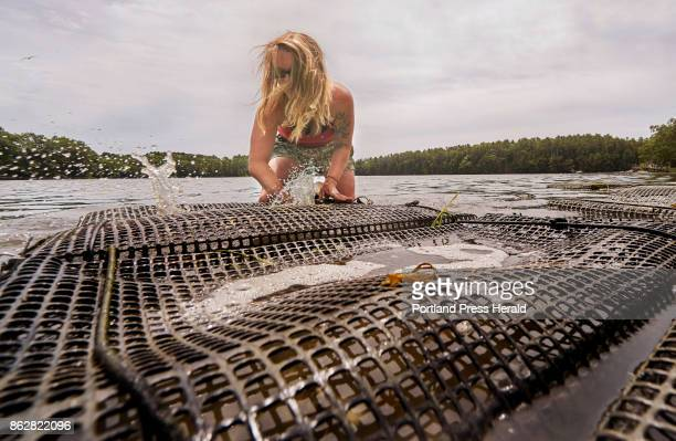 Sarah Wineburg cleans a bag of oysters that she is raising in the Damariscotta River in Damariscotta on Thursday June 29 2017