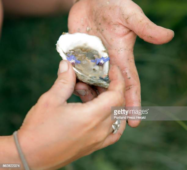 Sarah Wineburg garnishes an opened oyster before eating it along the banks of the Damariscotta River in Damariscotta on Thursday June 29 2017