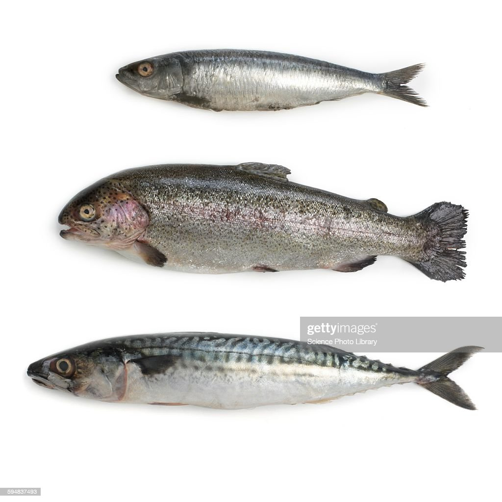 Sardine, rainbow trout and mackerel