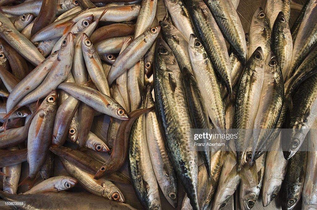 Sardines and mackerels : Stock Photo