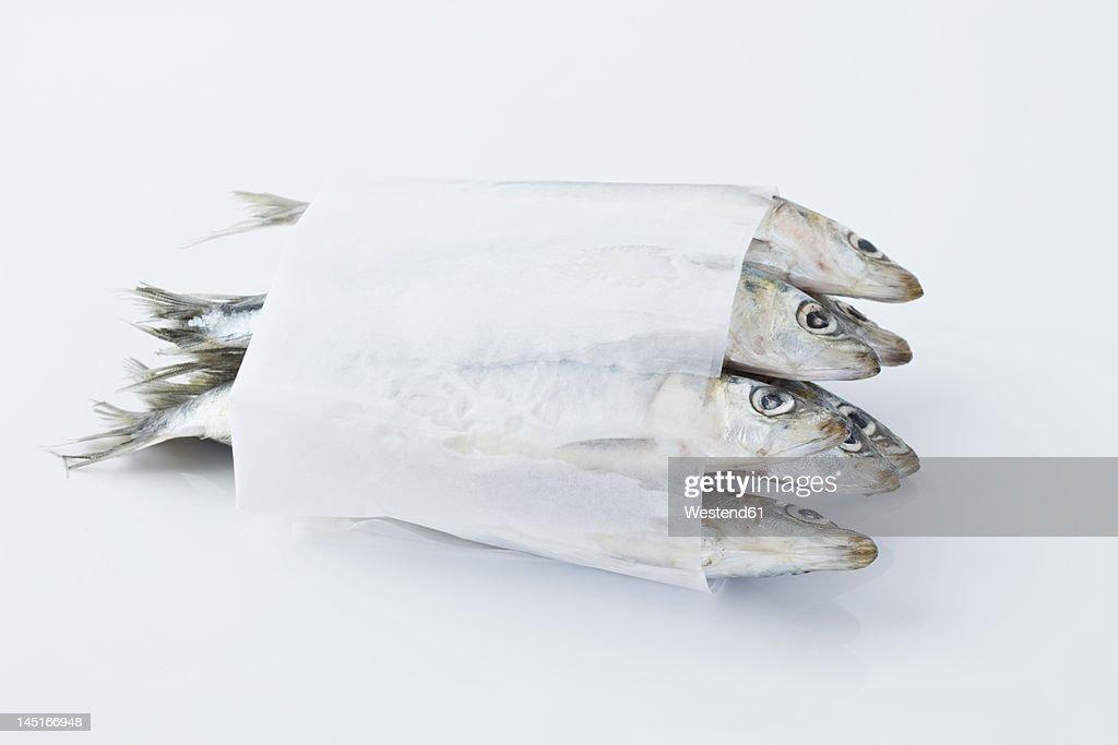 Sardines in wax paper on white background