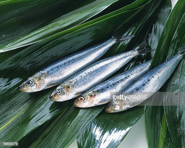 Sardines on leaves, Full frame, high angle view