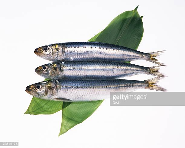 Sardines on leaves, side view, white background, cut out