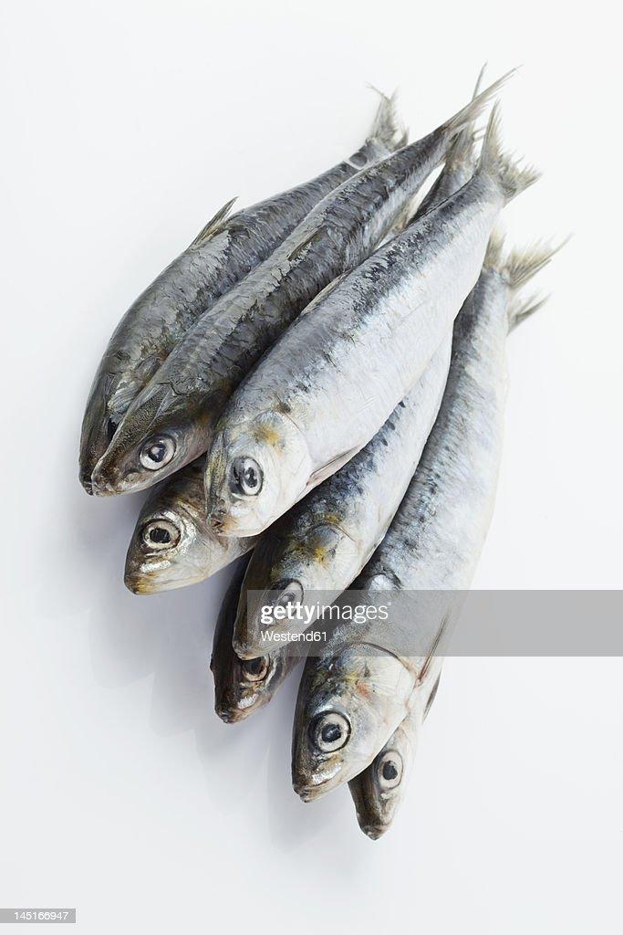 Sardines on white background : Stock Photo