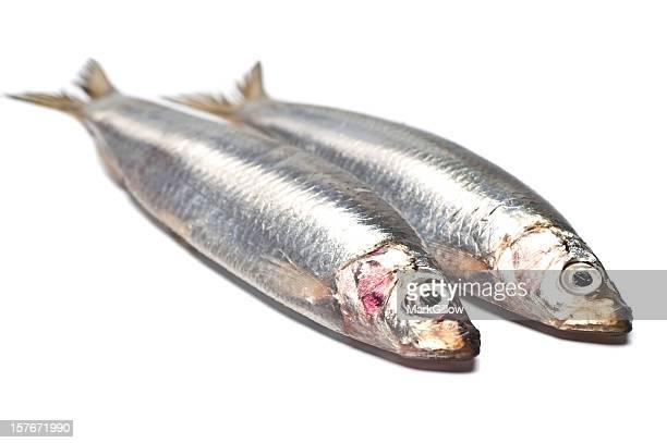 Des Sardines