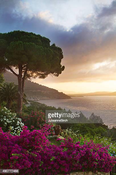Sardinia in bloom