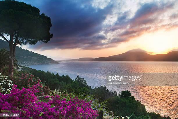 Sardinian garden at dusk