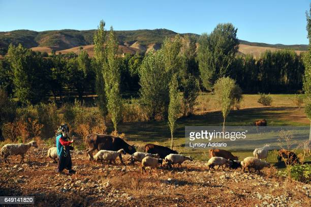 Sariben Uzun walks with her sheep in Guney Konak a village outside of Tunceli Turkey on Sept 24 2008 For much of the 1980's and 90's the Kurdish...