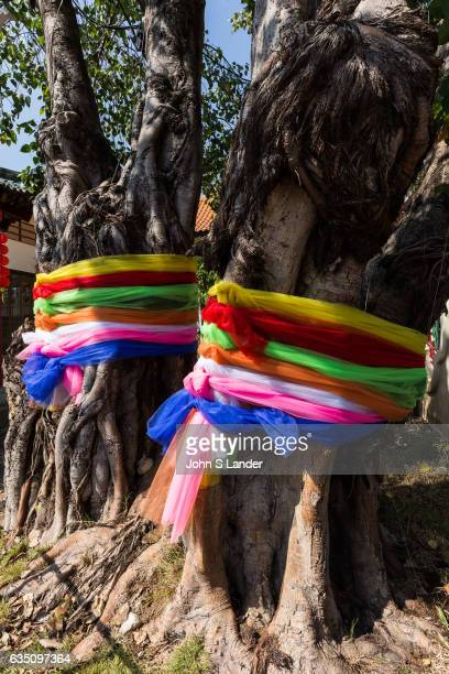 Sashes honoring a tree which in Asia is typically a Banyan tree According to myth the banyan is the one that can fulfill all your wishes Many sages...