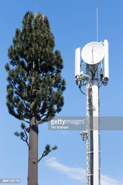 Sat dish disguise fake fir tree for mobile phone communication signals on Ile de Re France