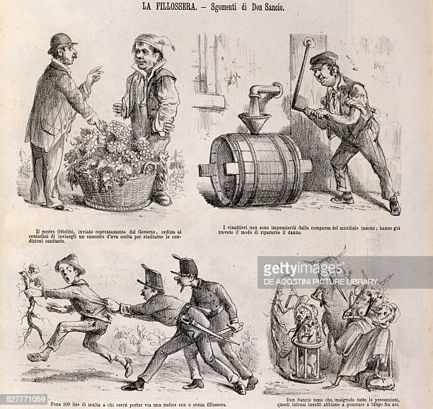 Satirical cartoon dedicated to the wine growing crisis caused by phylloxera illustration from the satirical newspaper Spirito Folletto September 18...
