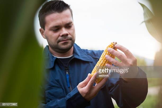 Satisfied Farmer holding corn