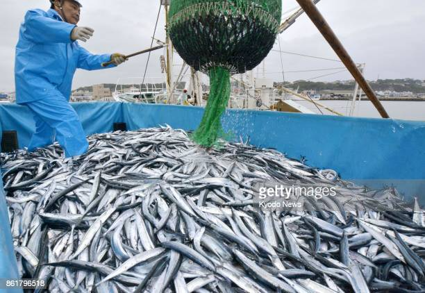 Saury are landed on Oct 16 for the first time of the season at the Onahama port in Iwaki Fukushima Prefecture The decline of saury catch has been a...