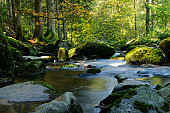 Saussbach in autumn, Bavarian Forest, Germany