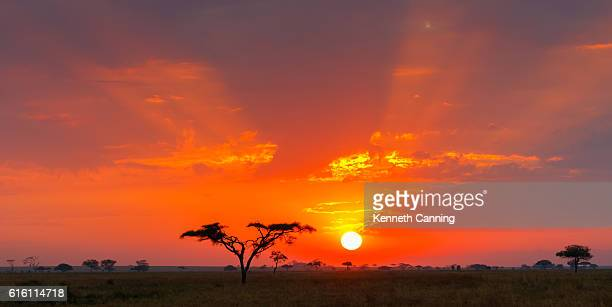 Savanna Sunrise and Acacia Tree, Serengeti, Tanzania Africa