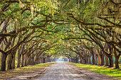 Savannah, Georgia, USA historic oak tree lined dirt road.