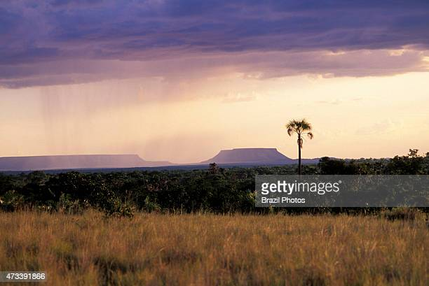 RANGE MATEIROS TOCANTINS BRAZIL Savannah vegetation and rain near Serra do Espírito Santo at Jalapão State Park in Tocantins State Brazil