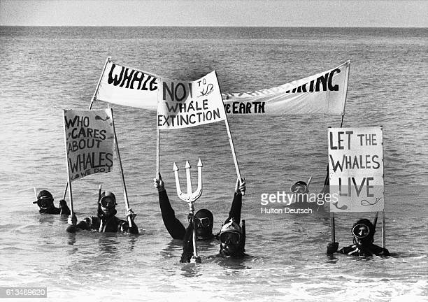 A Save the Whale demonstration in the sea by Friends of the Earth July 1990