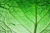 Savoy cabbage superfood texture