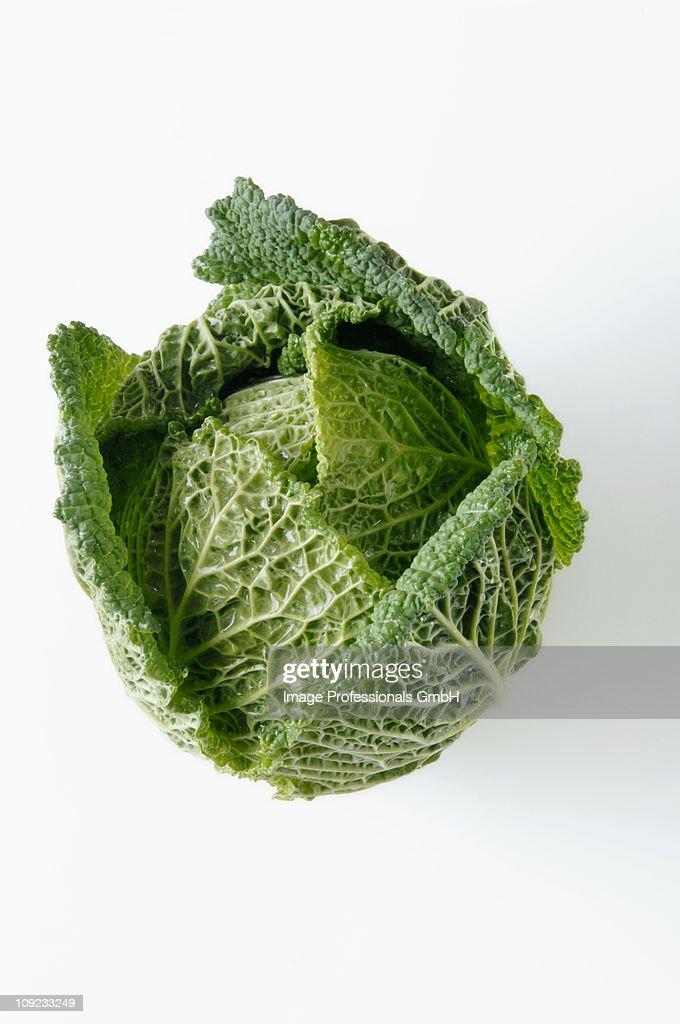 Savoy cabbage on white background, close-up : Stock Photo