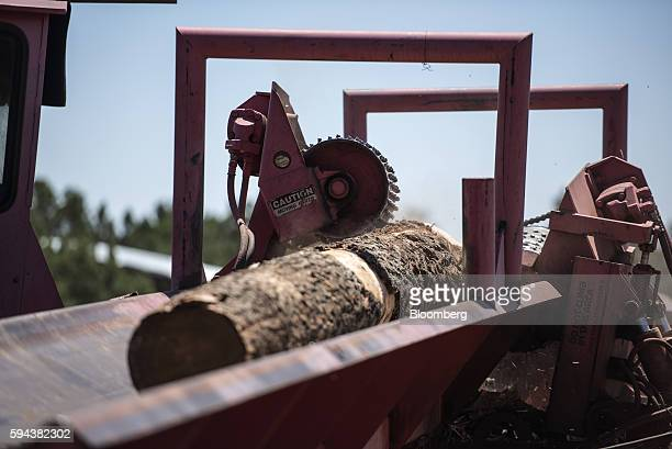 A saw strips bark from a log at the Spotted Owl Timber Inc mill in Santa Fe New Mexico US on Monday Aug 15 2016 Founded in 1991 the family owned and...