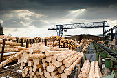 Stacks of logs at sawmill (lumber mill)