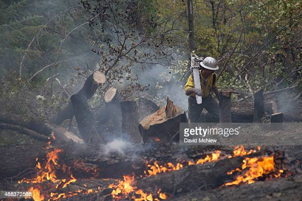 A sawyer climbs a hillside while cutting down trees that burned in the Valley Fire on September 15 2015 in Middletown California The 104squaremile...