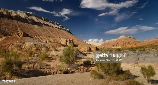 Saxaul shrubs and dry stream beds of Aktau mountains Altyn Emel National Park Kazakhstan