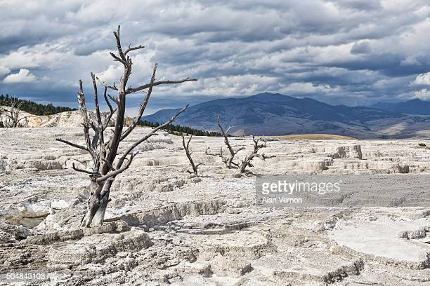 Scalded Earth and limestone