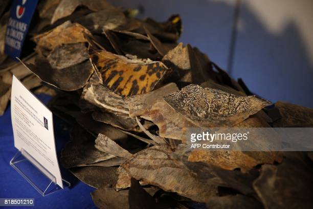 Scales of sea turtles seized by the French Customs are pictured at RoissyCharles de Gaulle airport on July 18 following the implementation of the...