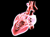Digital heart MRI on black background. Heart attack research technology in the near future. Healthy heart analysis.