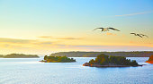 Scandinavian landscape with small islands in the archipelago of Stockholm at sundown and flying sea gulls. Sweden.