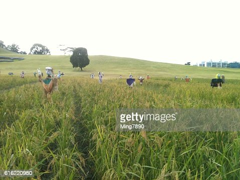 Scarecrow and harvest : Stockfoto