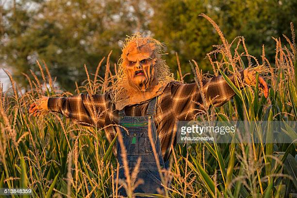 Scarecrow in a cornfield