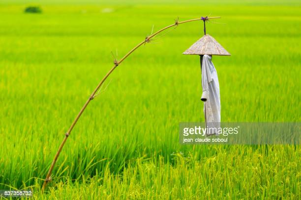 Scarecrow in a rice field, in North Vietnam