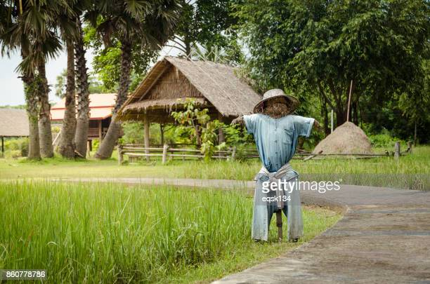 Scarecrow in countryside farm in Thailand