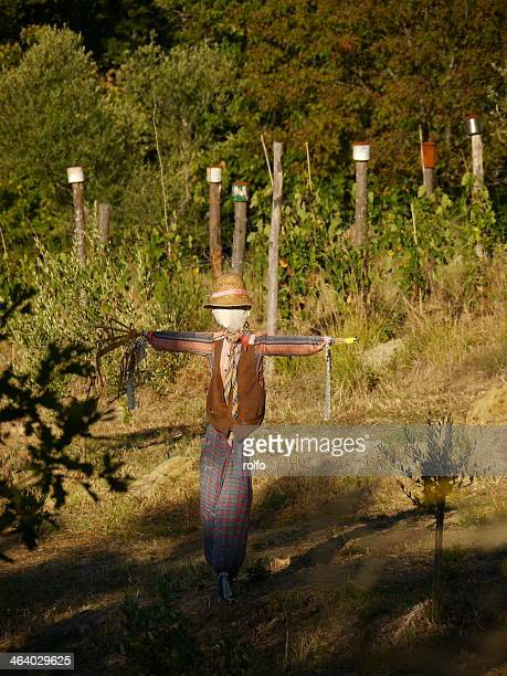 Scarecrow orchard tuscany