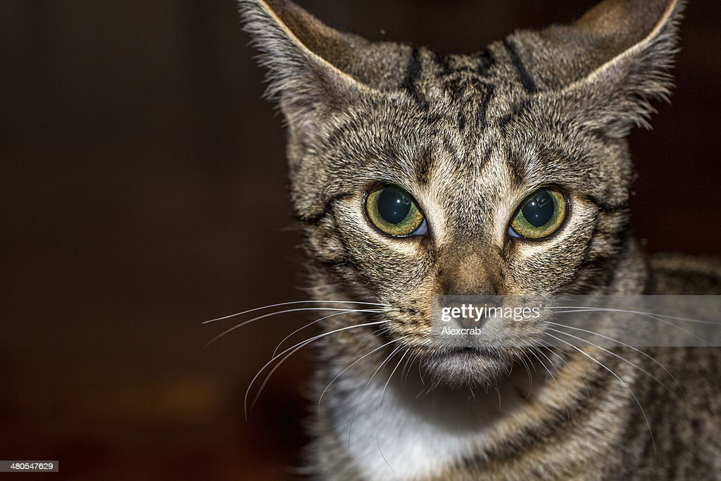 Scared Cat : Stock Photo
