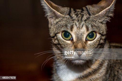 Gatto spaventato : Foto stock