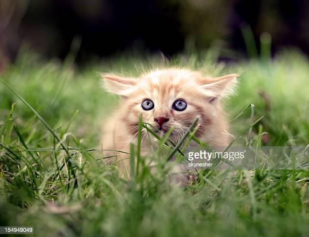 Scared little cat.