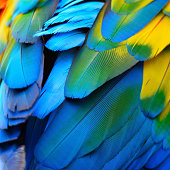 Beautiful nature background texture of Scarlet Macaw feathers pattern