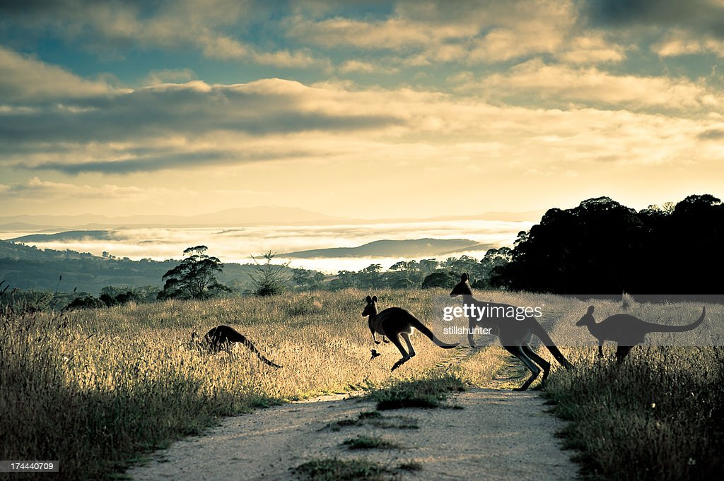 Scattering rays, roos and rosella : Stock Photo