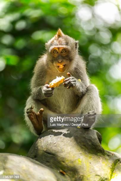 Scene in Monkey Forest
