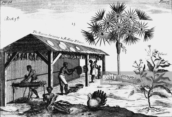 Scene on an American tobacco plantation 1725 Male female and child slaves rolling dried tobacco into ropes On the right is a tobacco plant From A...