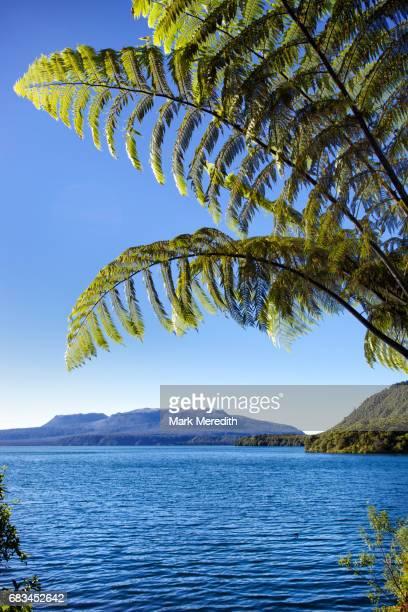 Scenery at Lake Tarawera near Rotorua