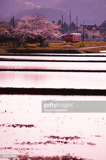 Scenery of spring of Japan
