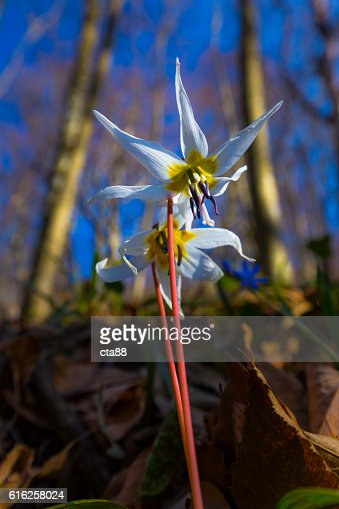 Scenery with beautiful wild flowers in spring : Stock Photo