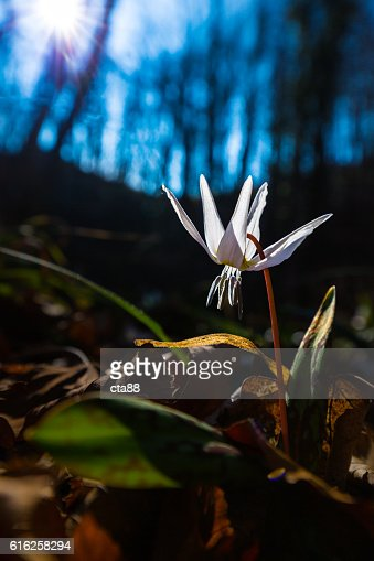 Scenery with beautiful wild flowers in spring : Foto de stock