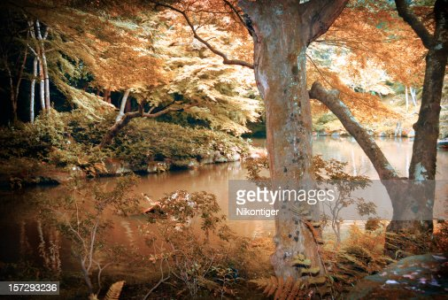 Scenes in a Japanese Forest