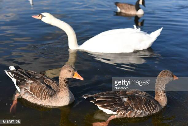 Scenes of daily life are pictured at Kensington Gardens London on August 31 2017 In the sunny afternoons people use to gather and walk around the...